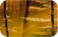 sunlight-image-citizens-community-bank